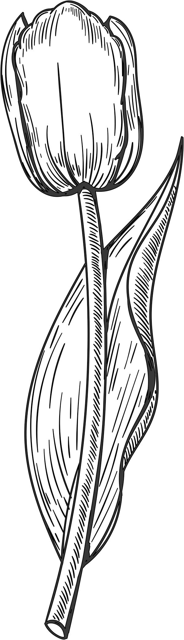 Tulip Stamp